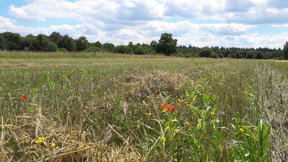 Natuur Brabants Landschap - Hillekens Hoeve