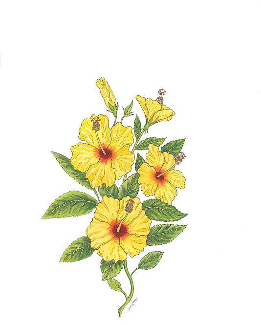 Hibiscus Sunshine Matted Print