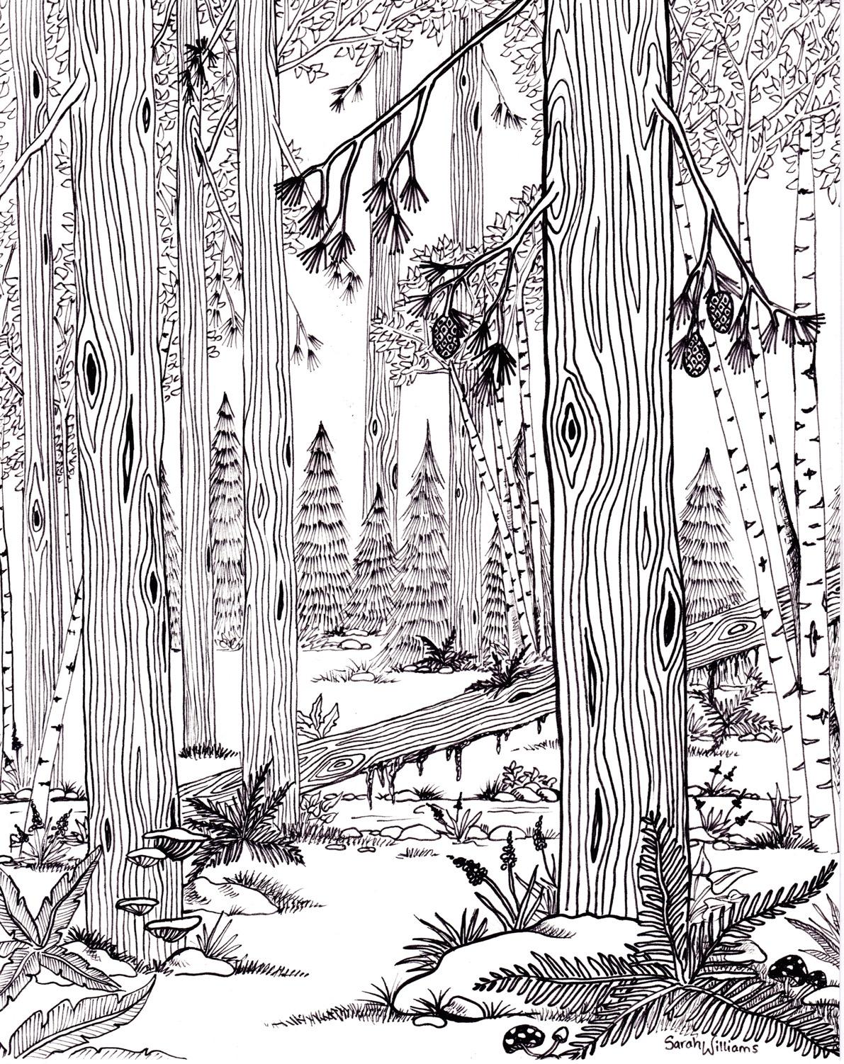 """Redwood Forest"""