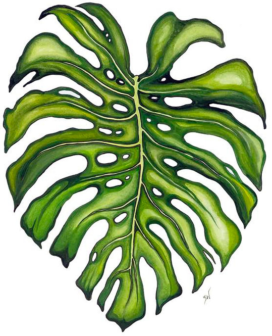 The Character of Monstera Matted Print