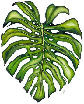 """""""The Character of Monstera"""""""