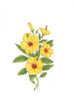 """Hibiscus Sunshine"""