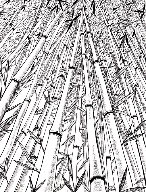 Bamboo Forest Matted Print