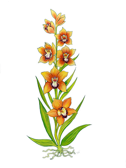 Emerging Orchid Matted Print