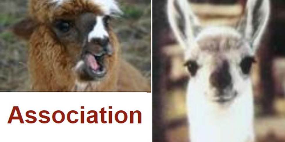 Education - Dressage en douceur des lamas et alpagas