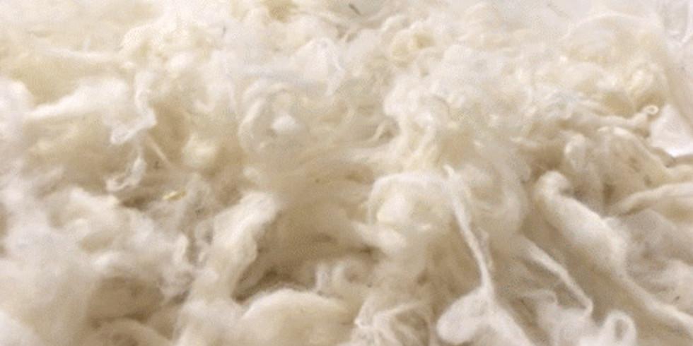 Grand rassemblement de la filière laine d'alpaga en France