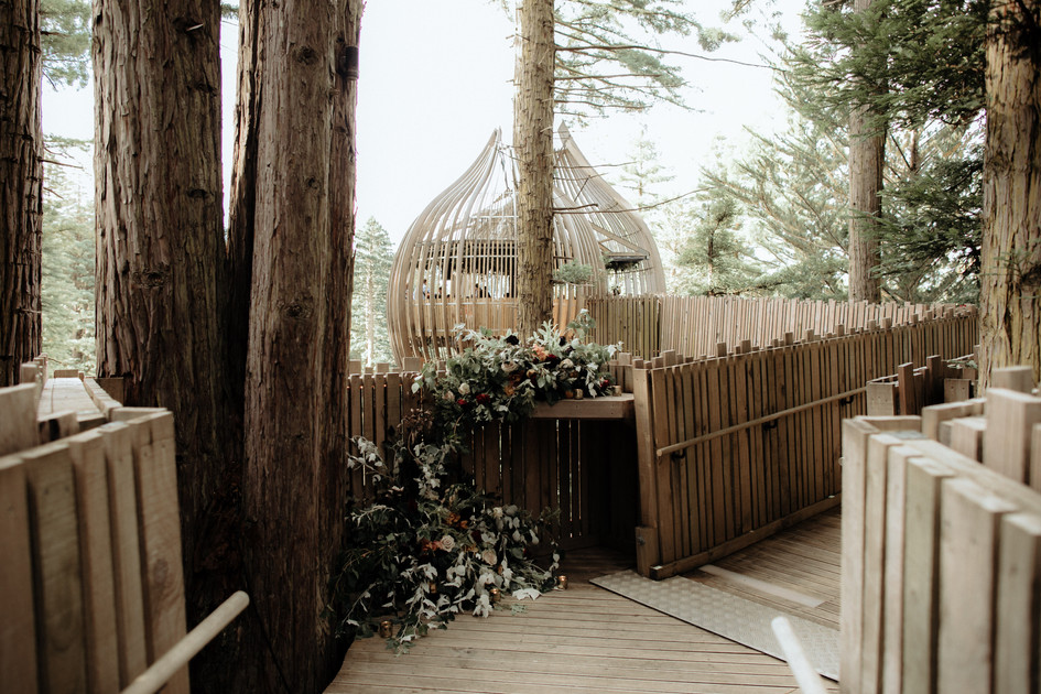 redwoods_treehouse_warkworth.jpg