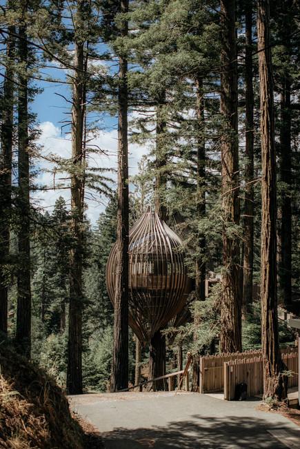 forest_wedding_auckland.jpg