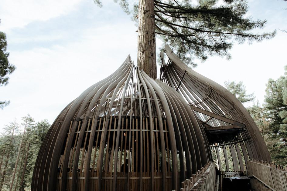 redwoods_treehouse_wedding_planner.jpg