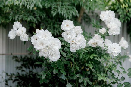 auckland_wedding_roses.jpg