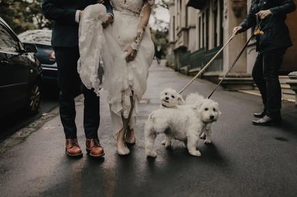 wedding_dogs_auckland.jpg