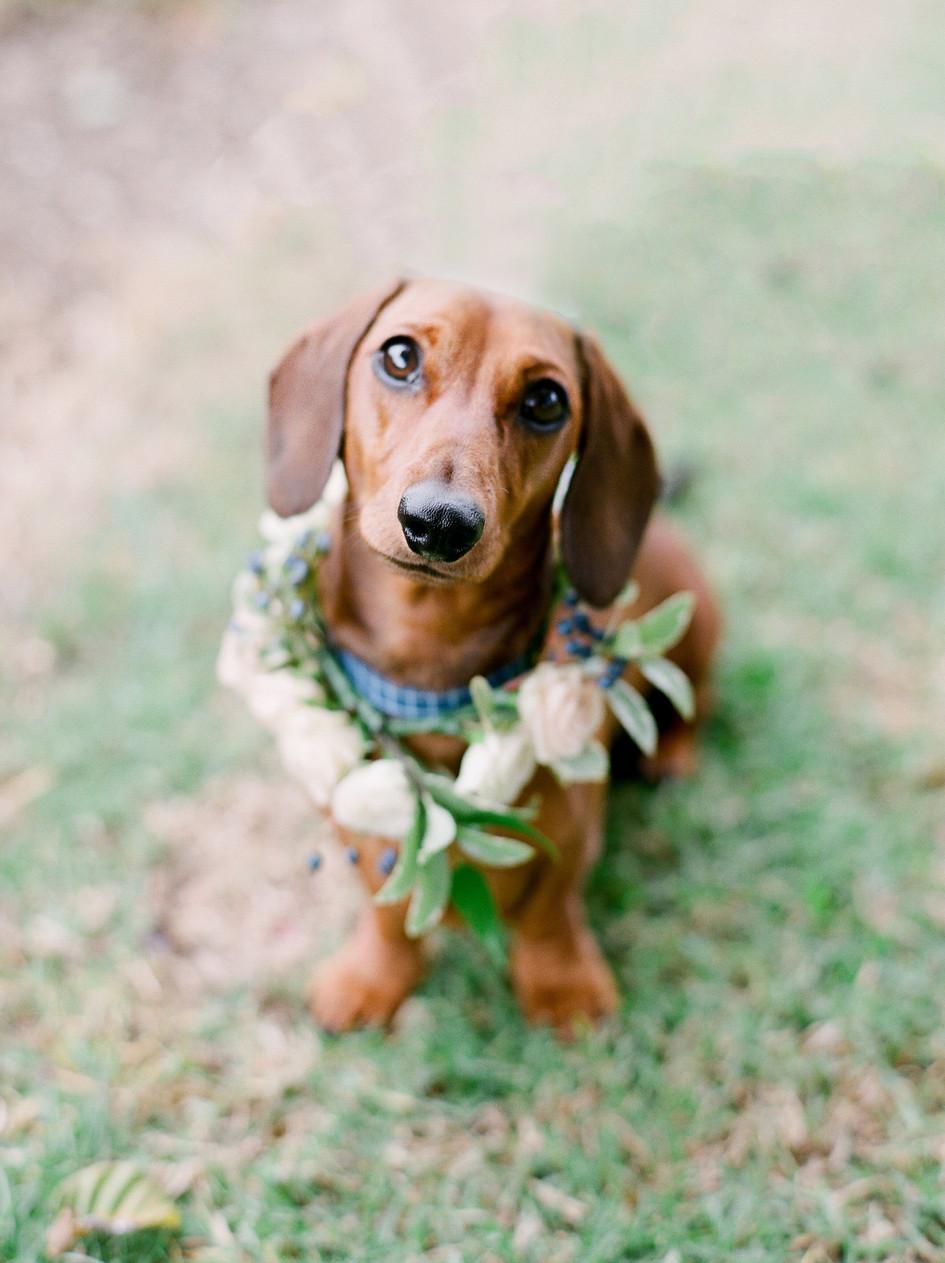 wedding_puppy.jpg