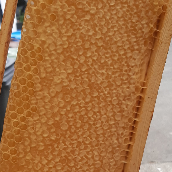 Honey comb on wire frame