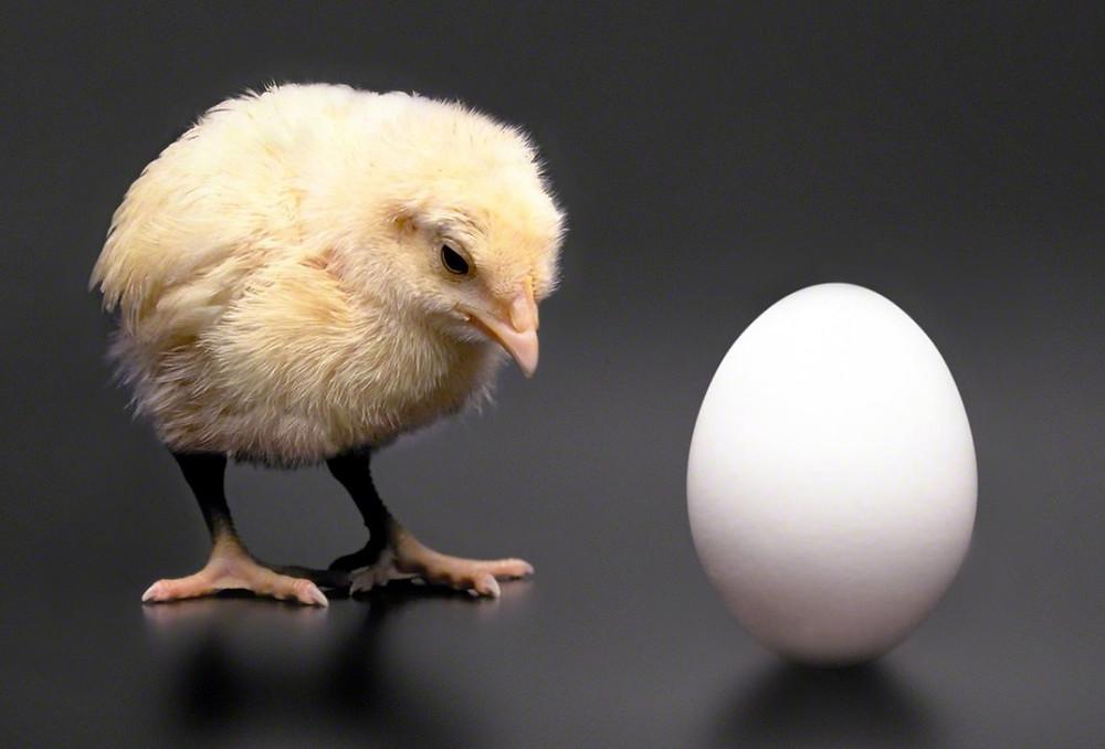 so-chicken.jpg