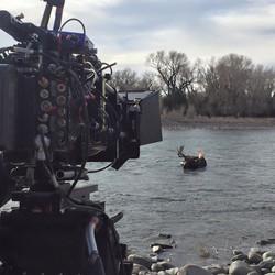 Cool Diver and moose shot