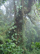Cloud Forest at Braulio Carrillo National Park