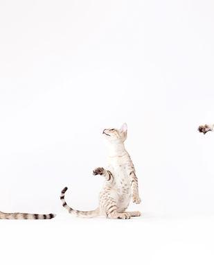노는 고양이