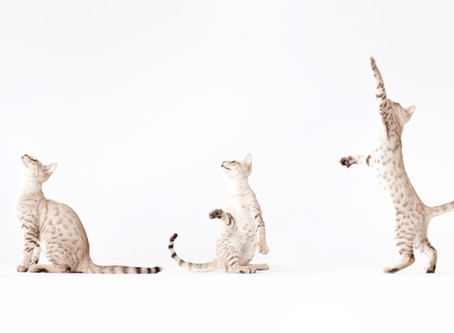 Decoding Your Cat's Behavior