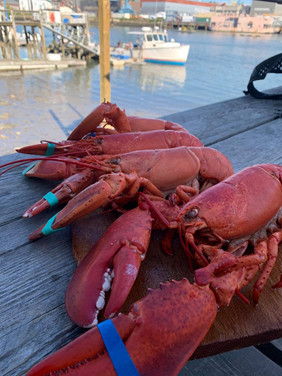 Cooked Lobster on the Pier