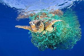 schildpad met net.jpg