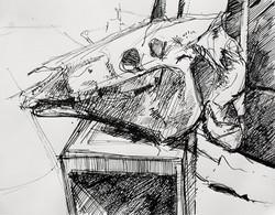 Lyles_horse skull in ink_ Ink on Paper_9