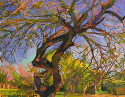 Lyles_Misquite Twist, Oil on Canvas, 201