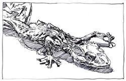 Drawing_Gekko.jpg