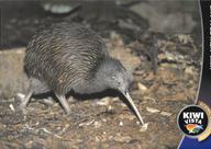 Kiwi Vista, Western Australia