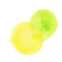 黄色と黄緑の丸.jpg