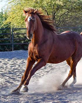 tierramadrehorse.jpg