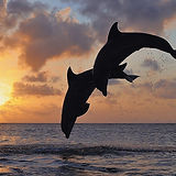 seas-jumping-islands-dolphins-bay-1920x1