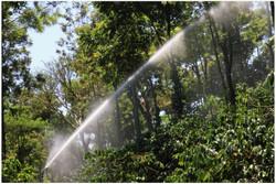 Sprinklers in the Estate
