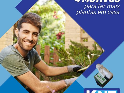 4 Motivos para Ter Mais Plantas em Casa