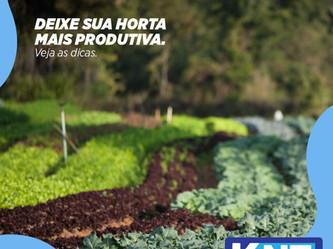 Deixe sua Horta mais Produtiva. Veja as Dicas.