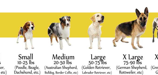 How to Pick a Good Service Dog for You Section 2: What Breed Best Suits You