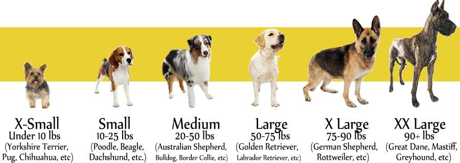 What size dog best fits your needs?
