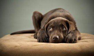 10 Negative Effects of Aversive Dog Training Methods