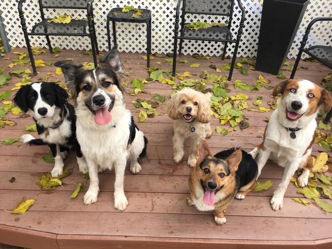 New Year; New Dogs: Meet Poozik, Felix & Moose