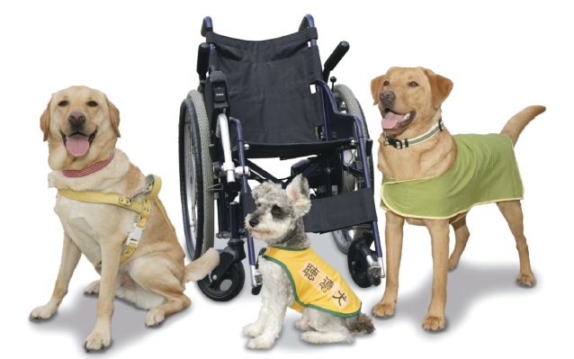 How to Pick a Good Service Dog for You -Section 1: Are You Ready for a Service Dog?