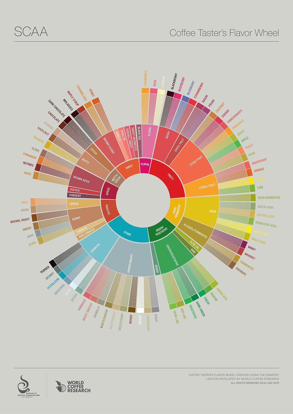 coffee taster's wheel scaa specialty coffee association of america