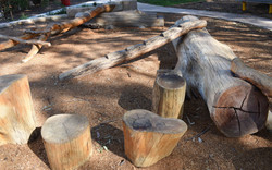 Notched Log and Steppers.jpg