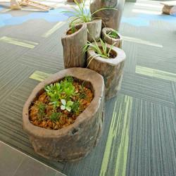 Hollow Log Planters