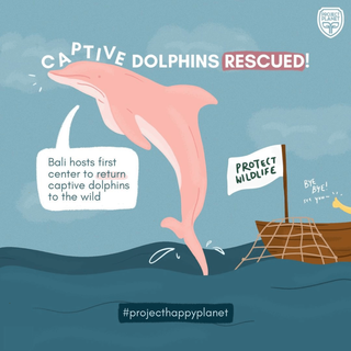 CAPTIVE DOLPHINS RESCUED