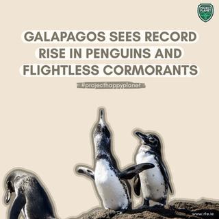 POPULASI PINGUIN GALAPAGOS DAN BURUNG LAUT CORMONANT MENINGKAT