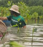 Mangrove Reforestation with Lindungi Hutan