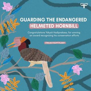 GUARDING THE ENDANGERED HELMETED HORNBILL