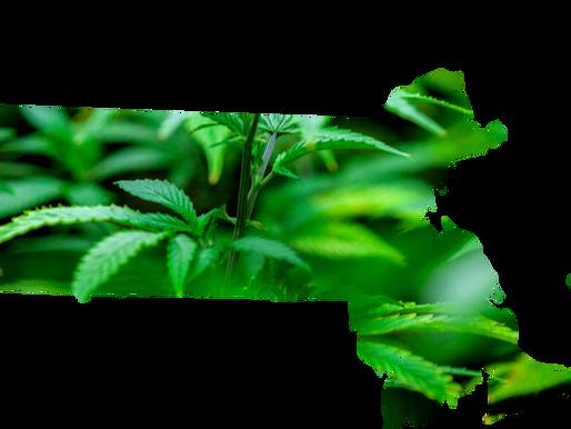 Massachusetts Could Become Marijuana Research Hub