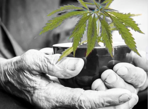 The Problem With Measuring Cannabis Addiction, And Why That Matters For Older Adults