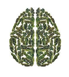 MJ bud brain.jpg