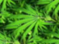 igudjr.org.il האיגוד הירושלמי למאבק בסמים ואלכוהול